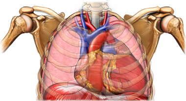 Cardiomegaly (Enlarged Heart)