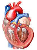 Enlarged Aortic Root