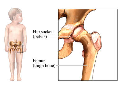 Child Hip Anatomy
