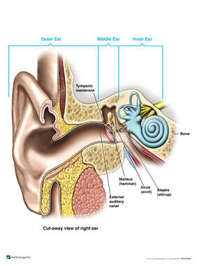 Normal Anatomy of the Right Ear