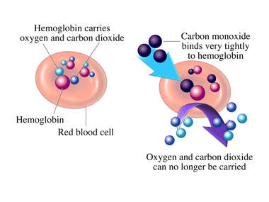 Carbon Dioxide Binding to Hemoglobin