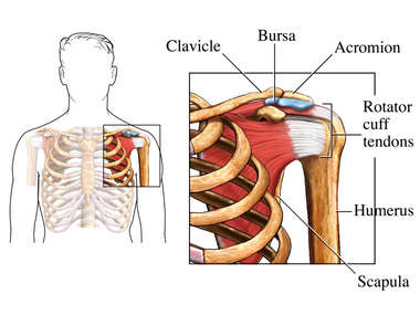 Shoulder with Bursa